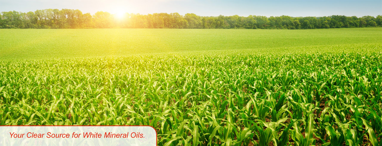 STE Oil Company, Inc  ShowGold Plus Soybean Oil for Animal